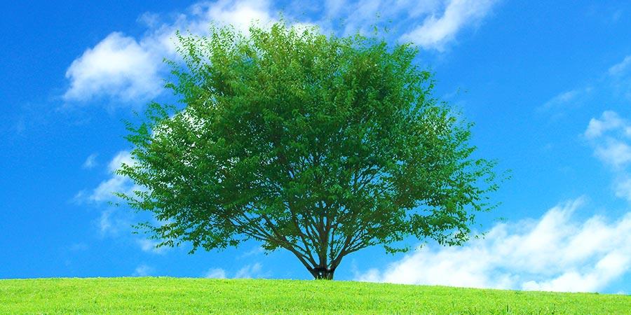 地球環境について